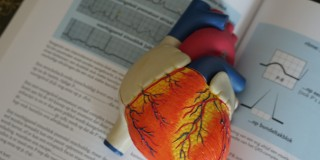 model human heart on top of medical text